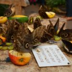 Stratford-upon-Avon: Butterfly Farm
